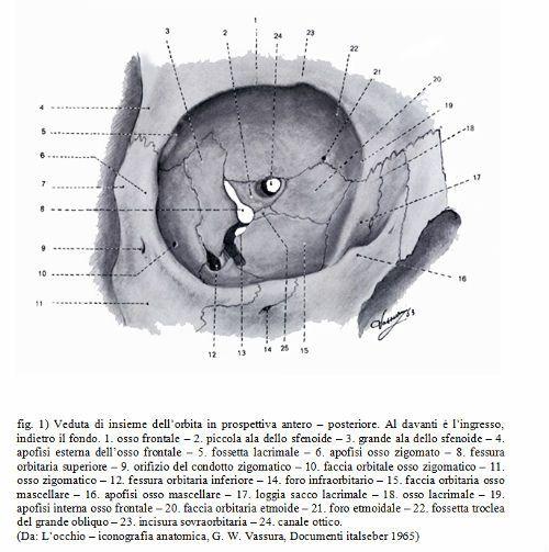 Orbita Oculare